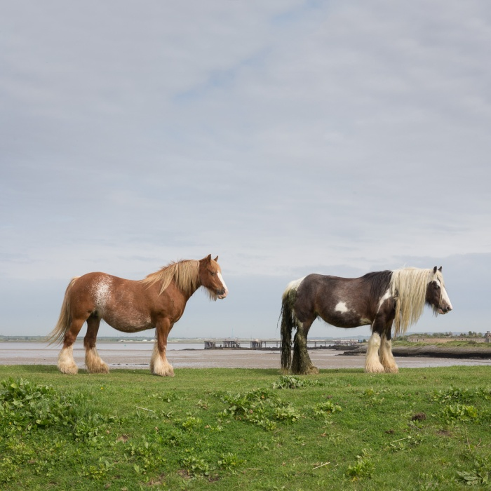 Horses by the Thames, Hoo Peninsula.