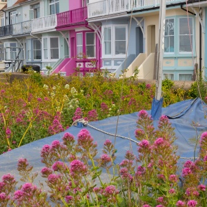 Pinks, Whitstable.