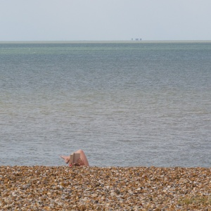 Reading, Whitstable.