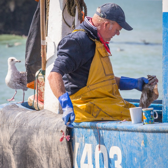 Gutting Plaice, Hastings Harbour, Sussex.