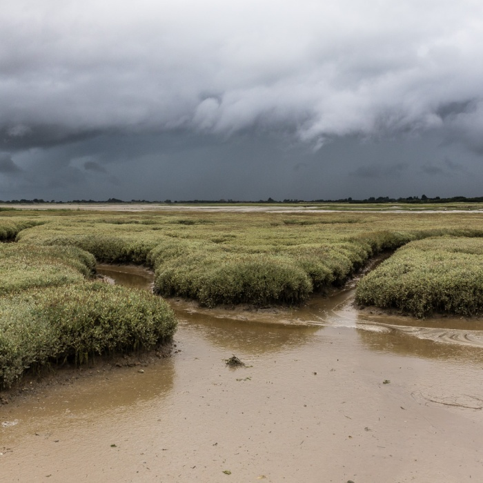 Pagham Harbour II, Sussex.