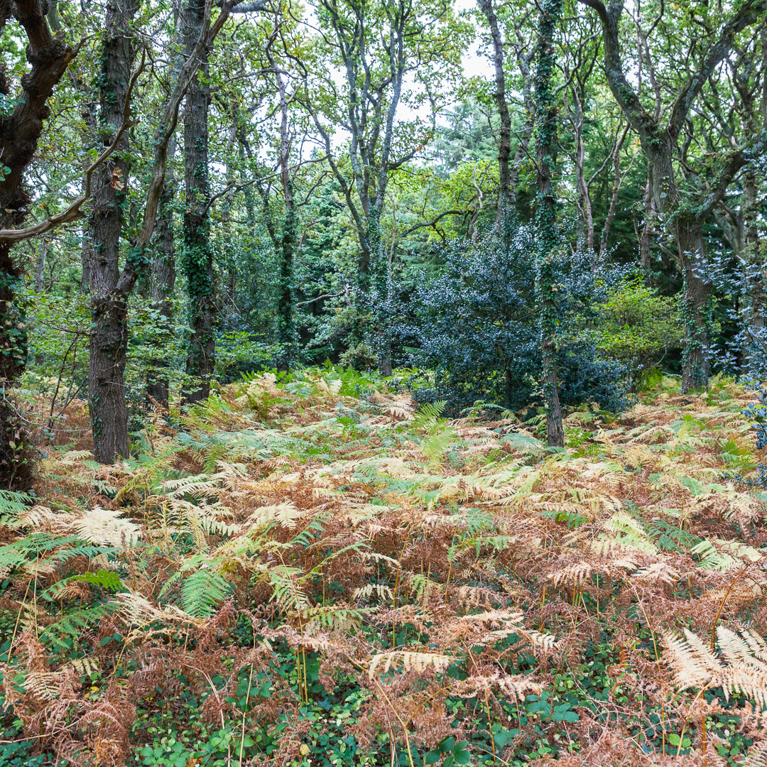 Sowley Brooms II, New Forest, Hampshire.