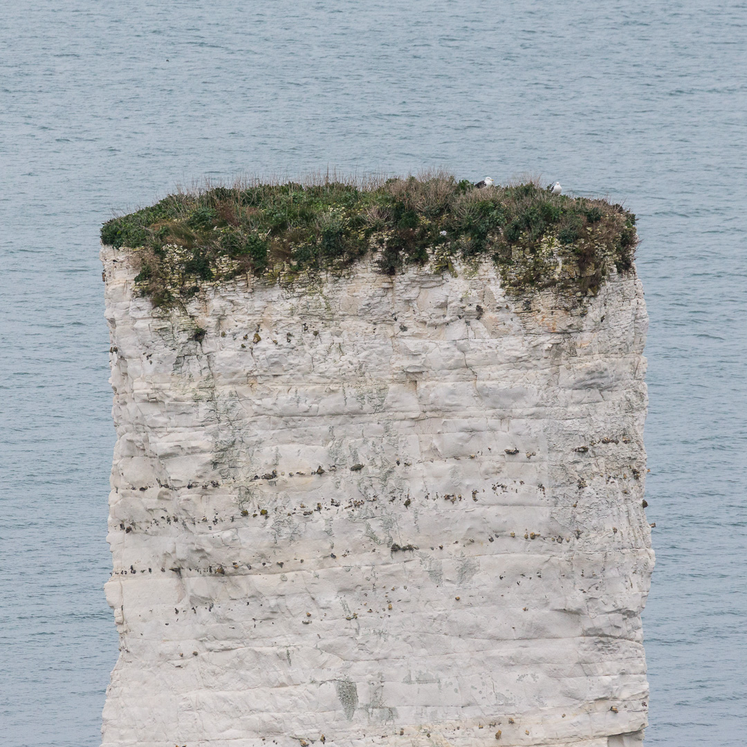 Chalk stack of Old Harry Rocks, Studland, Dorset.