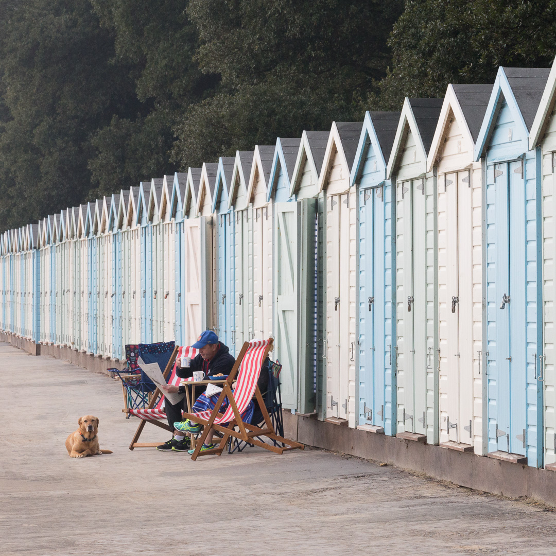 Labrador and beach huts, Mudeford, Dorset.