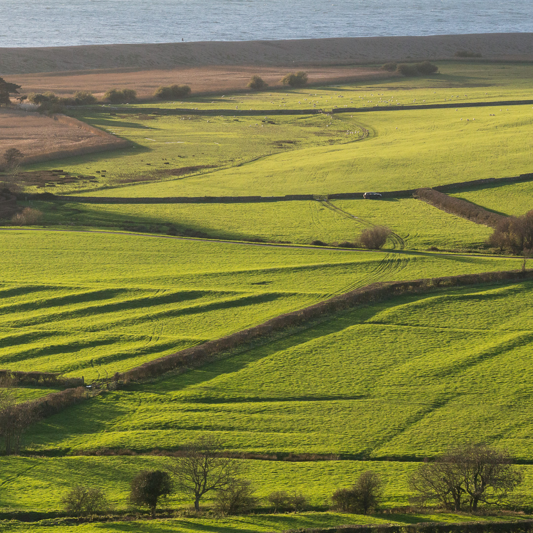 Ancient field boundaries by Abbotsbury Swannery, Dorset.