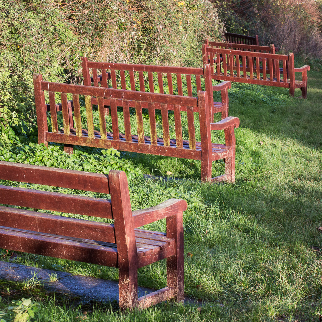 Bench infestation, Sidmouth, Devon.