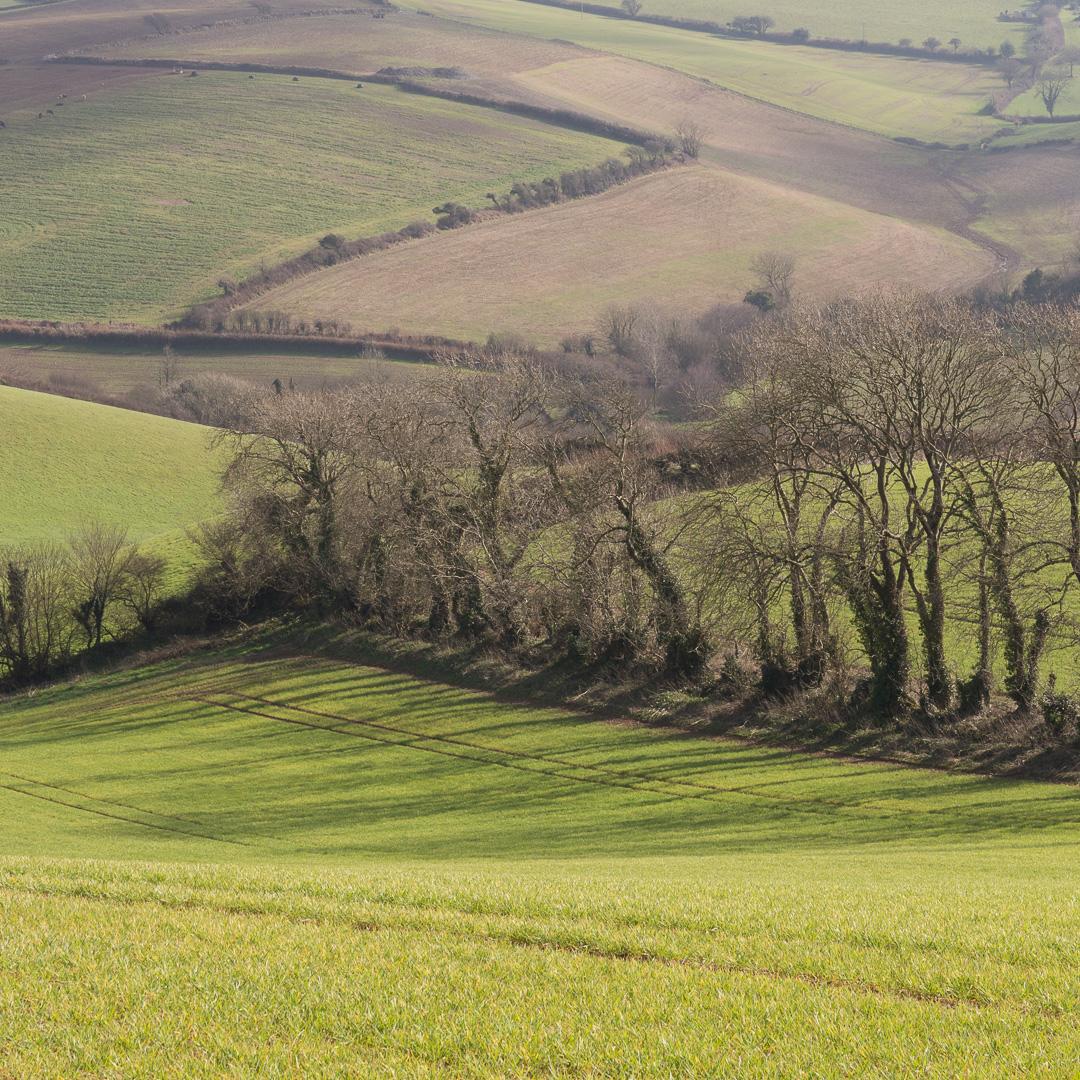 Farmland, South Pool, Devon.