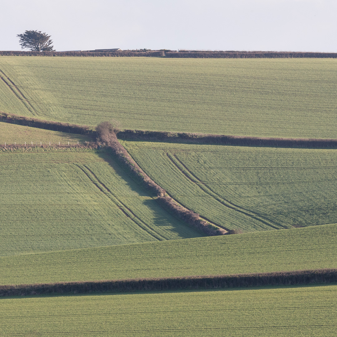 Farmland approaching Salcombe, Devon.