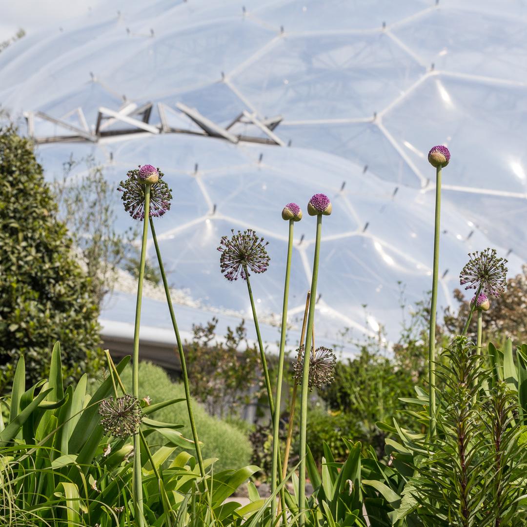 Eden Project garden, Cornwall.