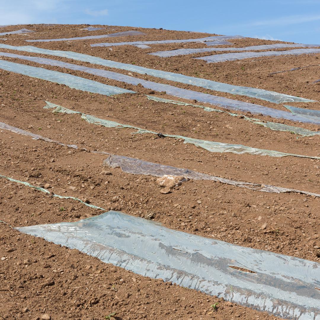 Plastic fields, Polrudden, Cornwall.