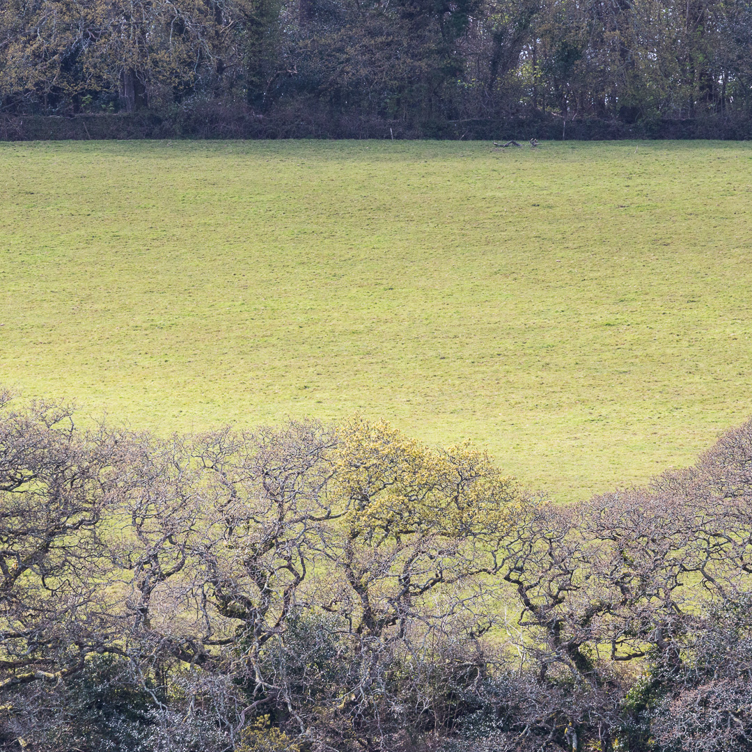 Fields near Trelissick Gardens, Cornwall.