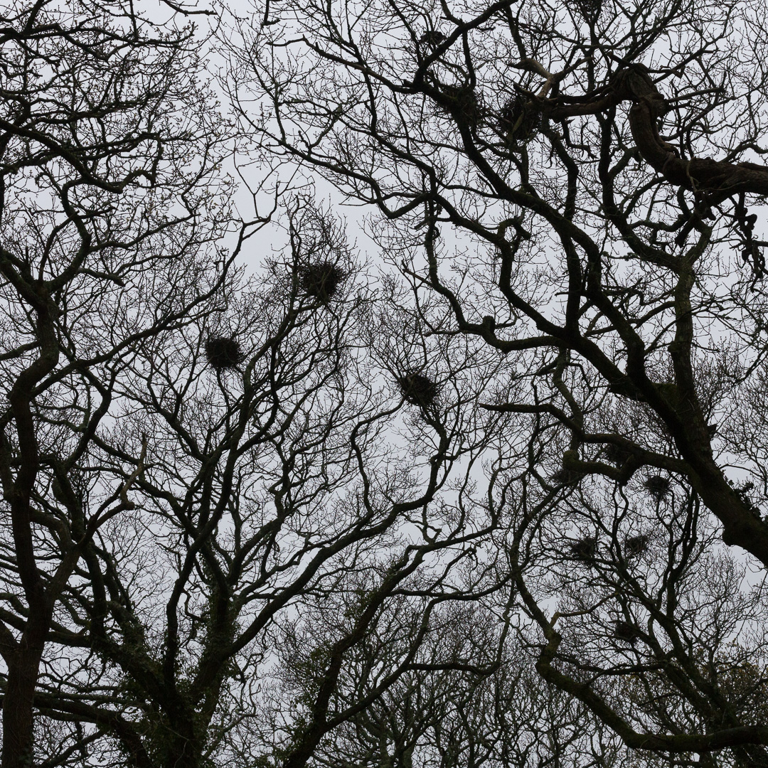 Rookery, Gweek, Cornwall.