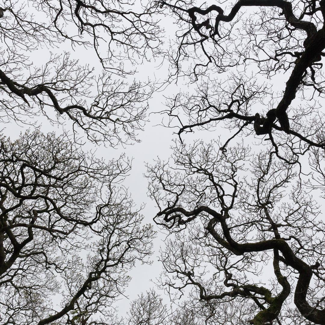 Tremayne Woods, Cornwall.