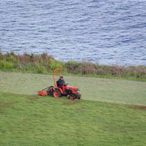 Mowing, St Loy, Cornwall.