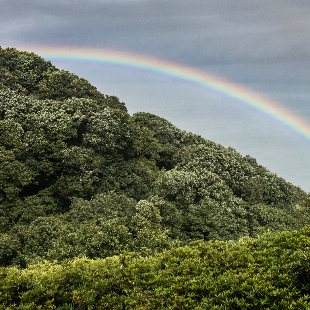 Rainbow over Culbone Wood, Somerset.