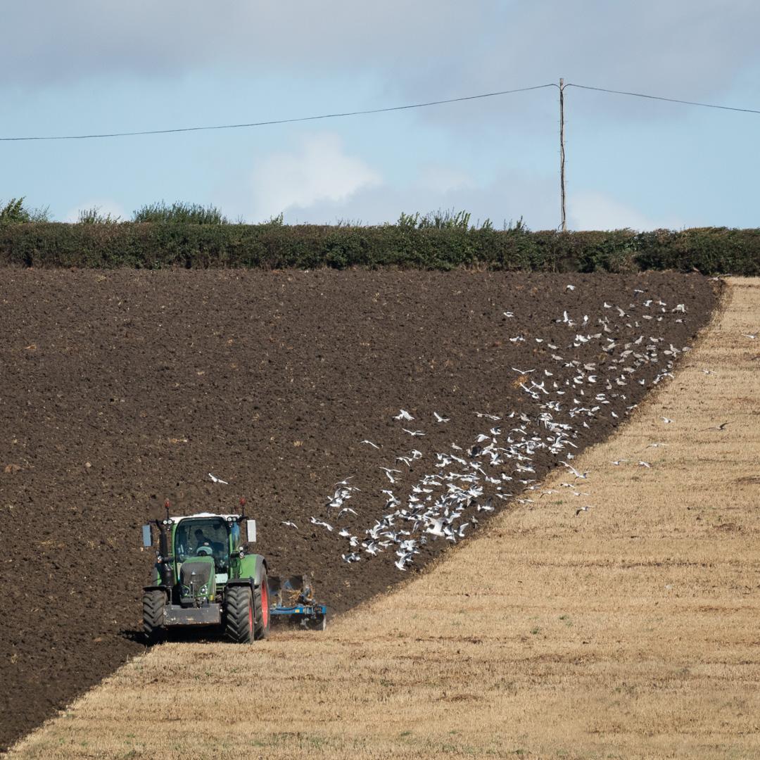 Ploughing, Walpole, Somerset.