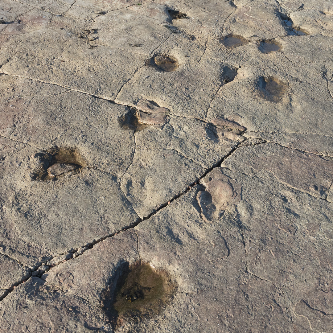 200-million-year-old Dinosaur footprints, the Bendricks, Glamorgan.
