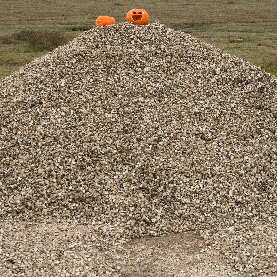 Halloween on Cockle shells, Crofty, Gower, Glamorgan.