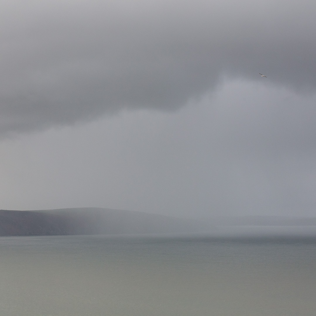 Gull & oncoming shower from Cemaes Head, Pembrokeshire.