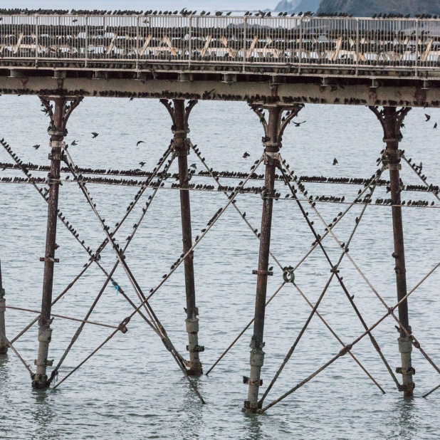 Murmuration of starlings roosting on Aberystwyth pier, Ceredigion.
